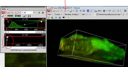 Generating Great 3-D Images with NIS Elements - Austins Imaging Blog